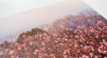 PAPER REVIEW:『OKトップコートマットN』王子製紙